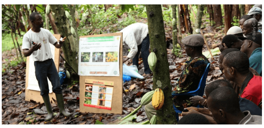 Callebaut initiative teaching a group of local farmers methods to increase productivity